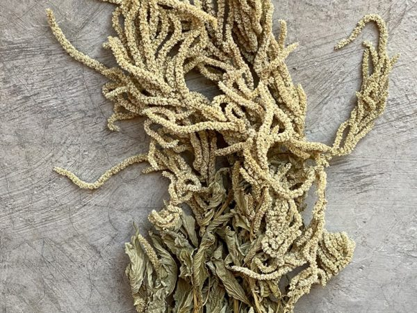 Amaranthus Long Green