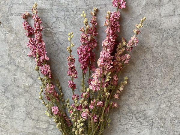 Delphinium Pink