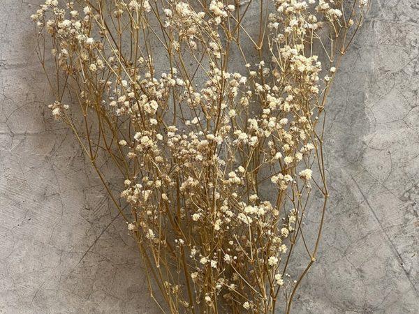 Paniculata Natural