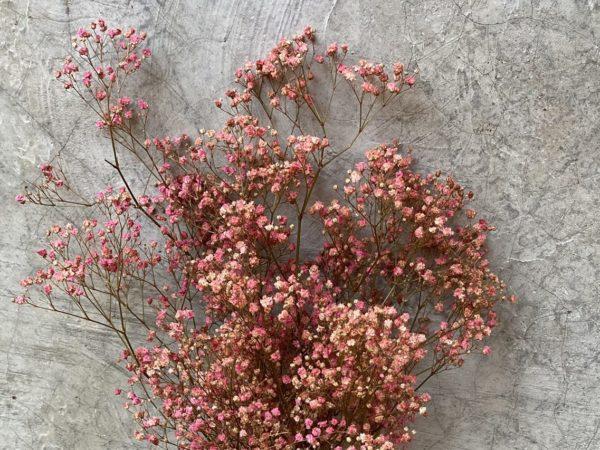 Paniculata Pink