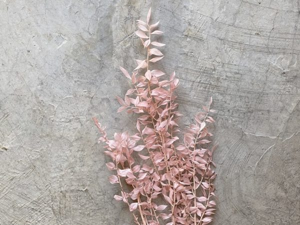 Ruscus Pink