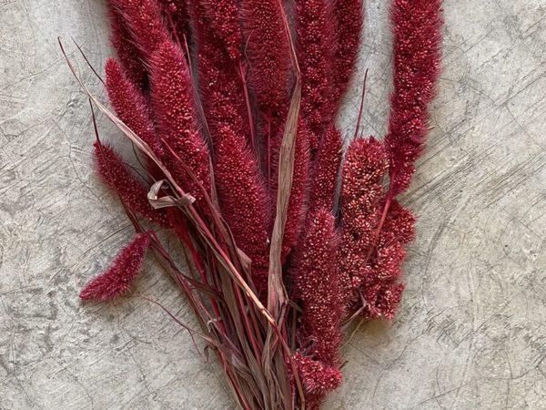 Satarea Red