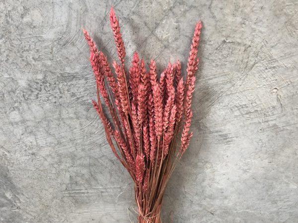 Wheat Pink